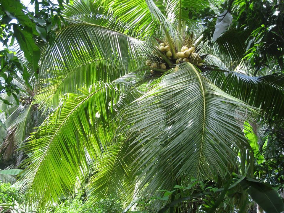 941568 559130914163506 861988754 n Nghệ thuật đặc sắc từ thân cây dừa ở Bến Tre không phải ai cũng biết