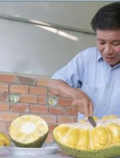 Vài triệu đồng một trái mít 'khủng' ở Chợ Lách, Bến Tre